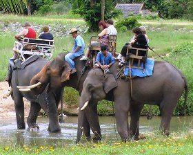 Thai-elefant