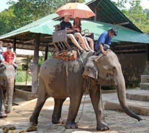 elefant dyr ferie turisme