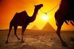 Egypten-pyramide-kamel.jpg