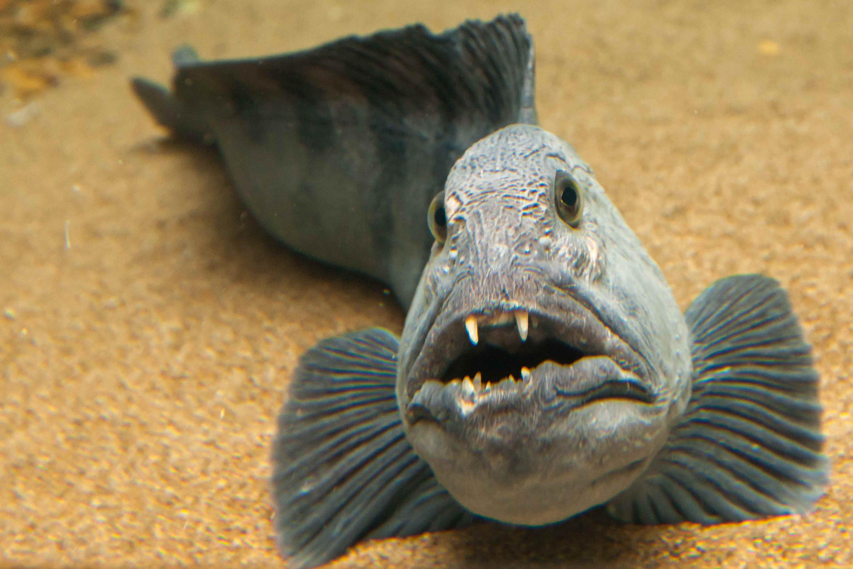 større fisk dating website