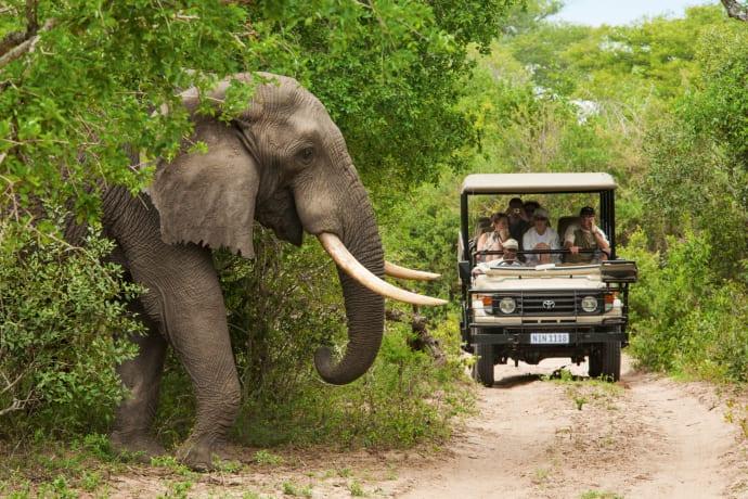 Elefant i Sydafrika.