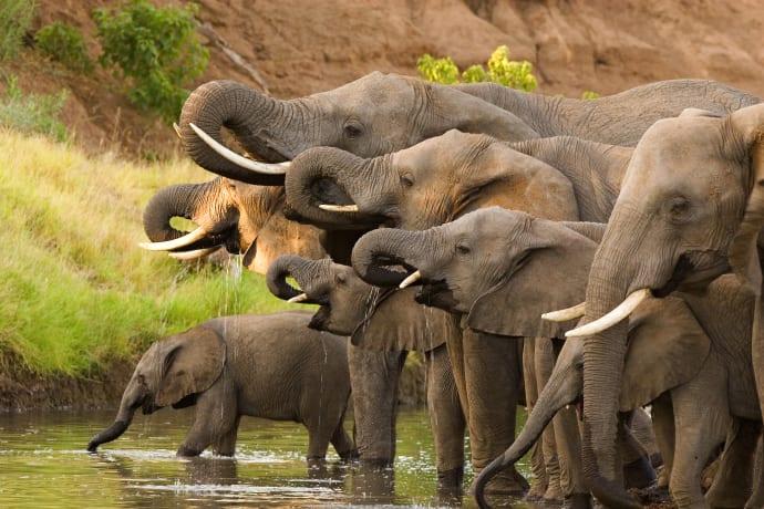 Det danske rejsebureau Africa Tours havde sidste år en vækst i omsætningen på 50 procent og fik sit første overskud. Foto: Africa Tours.
