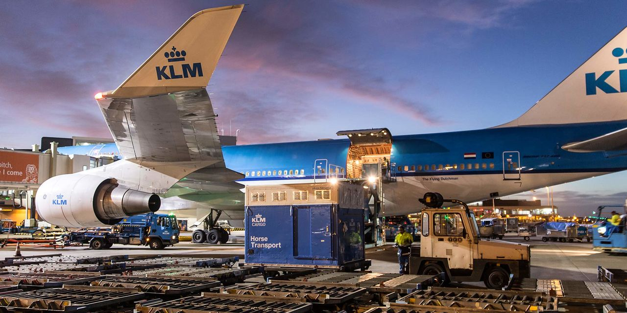 Hestetransport ved KLM-fly. Foto: Air France KLM Cargo.