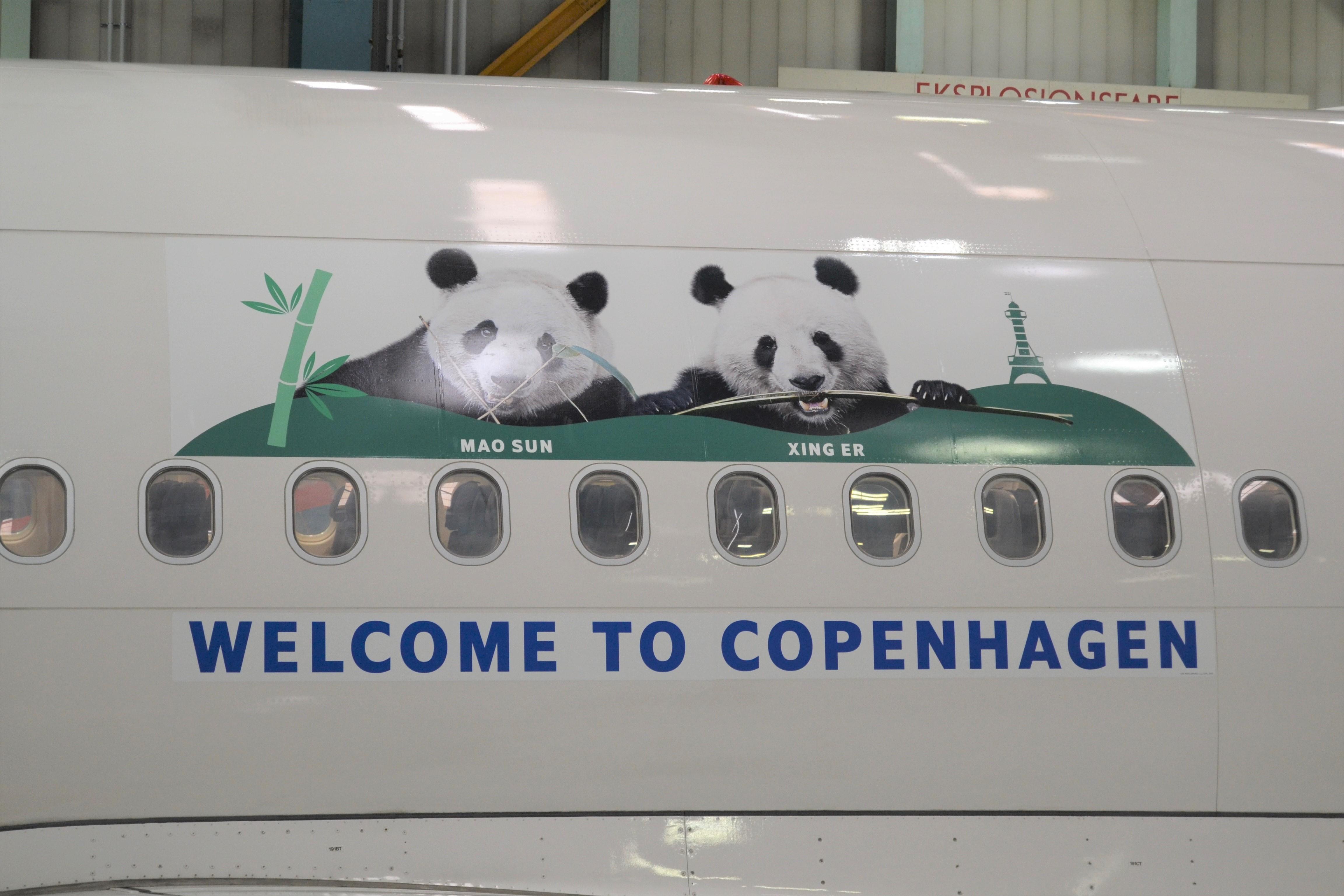 Folieringen med de to store pandaer pryder det SAS A340-fly, der torsdag bringerne bamserne til Københavns Lufthavn. Den særlige udsmykning bliver på flyet de næste måneder. Foto: SAS Cargo/SAS.