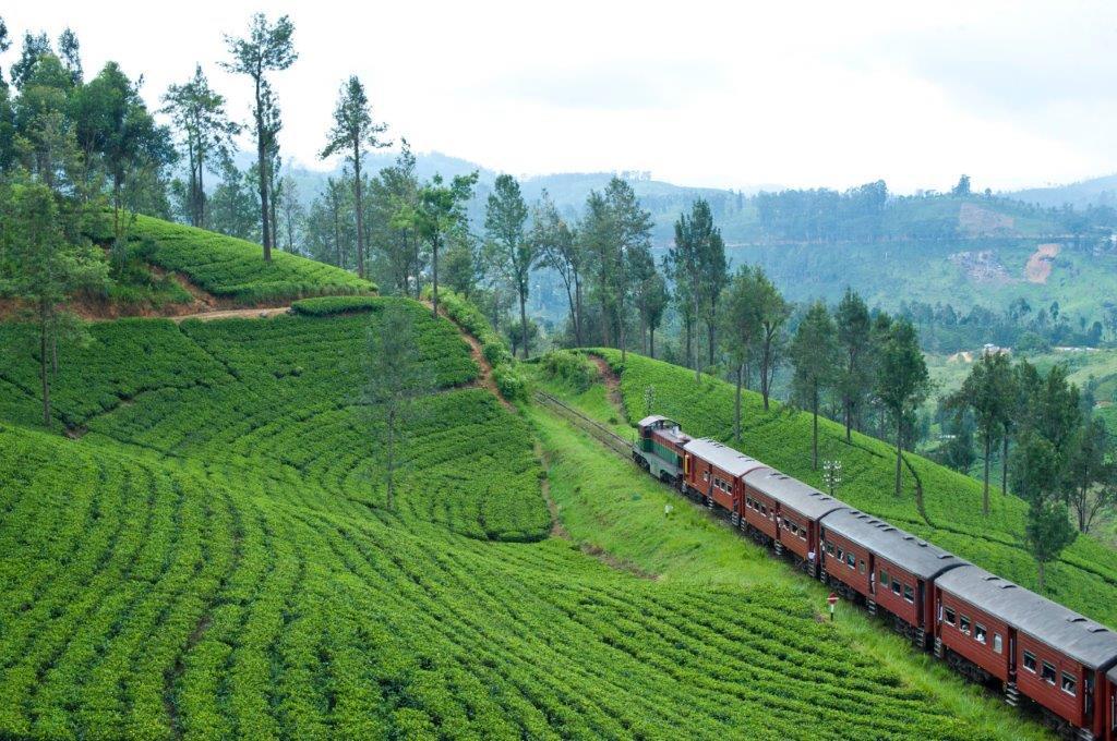 Sri Lanka kæmper for atter at få turister tilbage til den smukke ø. Foto: Discovery Travel og Peacock Travel.