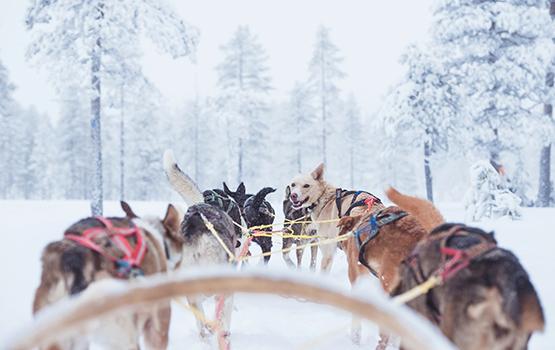 For 5.000 svenske kroner kan op til fire passagerer blive kørt fra den nye lufthavn Scandinavian Mountains Airport ved de svensk-norske skisportssteder Sälen-Trysil til højfjeldshotellet eller skibakken. Prisen er 5.000 svenske kroner per slæde. Foto: Peakpoints, via flyselskabet BRA.