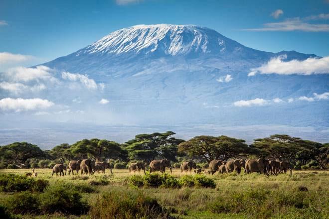 Aclass med tre danske onlinerejsebureau sælger rejser ud af Europa, blandt andet til Afrika, hvor kontinentets højeste bjerg, Kilimanjaro, her knejser i baggrunden. Foto: Afrika-Safari.dk