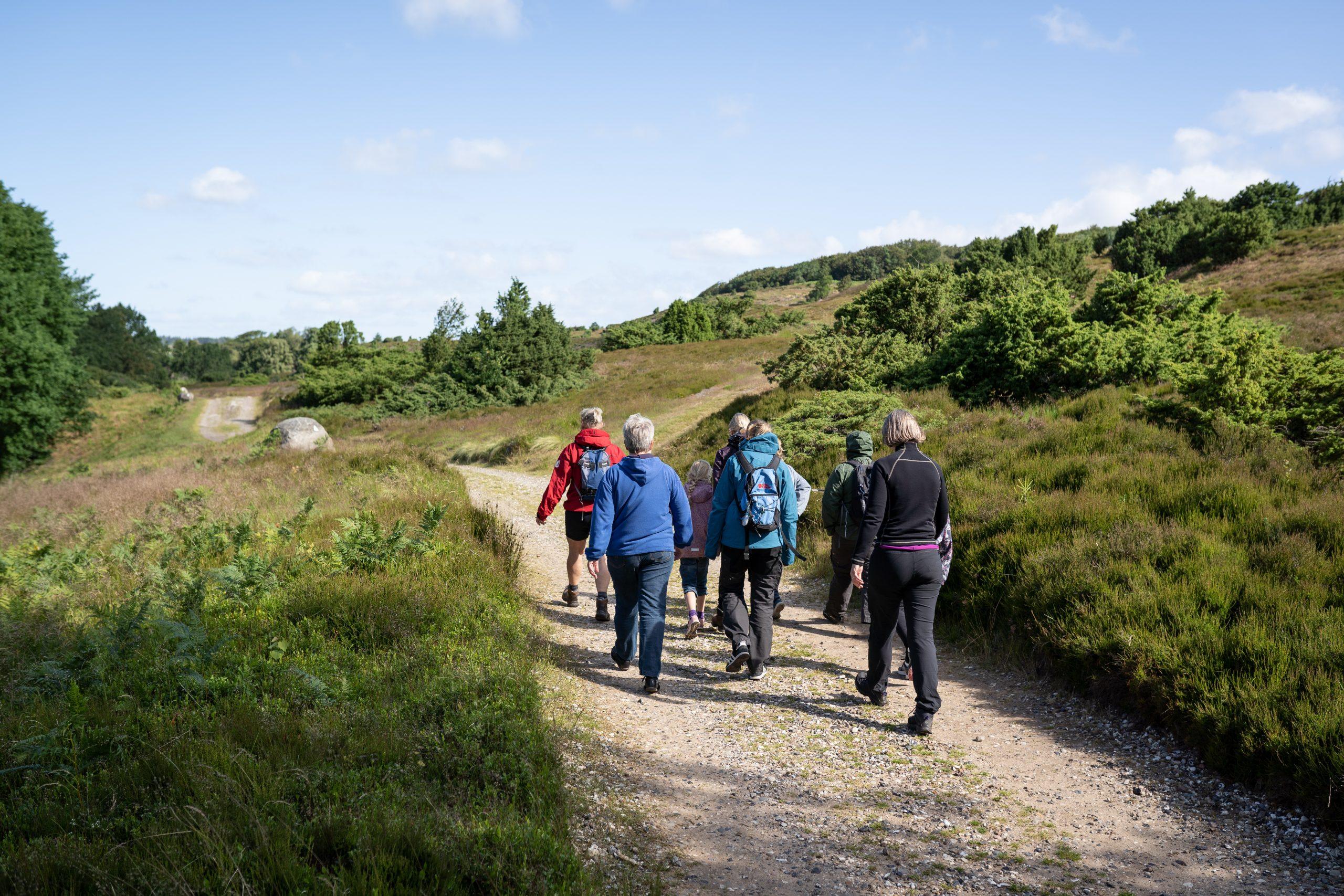 Nationalparken Mols Bjerge er et af de områder i Danmark, hvor Jysk Rejsebureau nu tilbyder vandreture. De fleste ture er endags-baserede med rejseleder. Pressefoto via Jysk Rejsebureau.