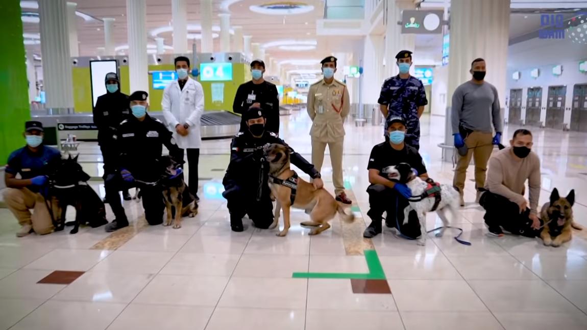 Politihundene, der kan opsnuse coronasmitte fra tests, med deres førere i lufthavnen i Dubai. Foto: WAM og Dubai International Airport.