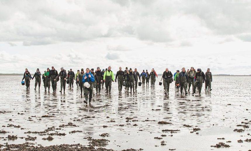 Østerssafari ved Vadehavet. Billund Lufthavn går i samarbejde med Danmarks Østersfestival, der holdes igen næste år. Pressefoto: Vadehavscentret via VisitDenmark.