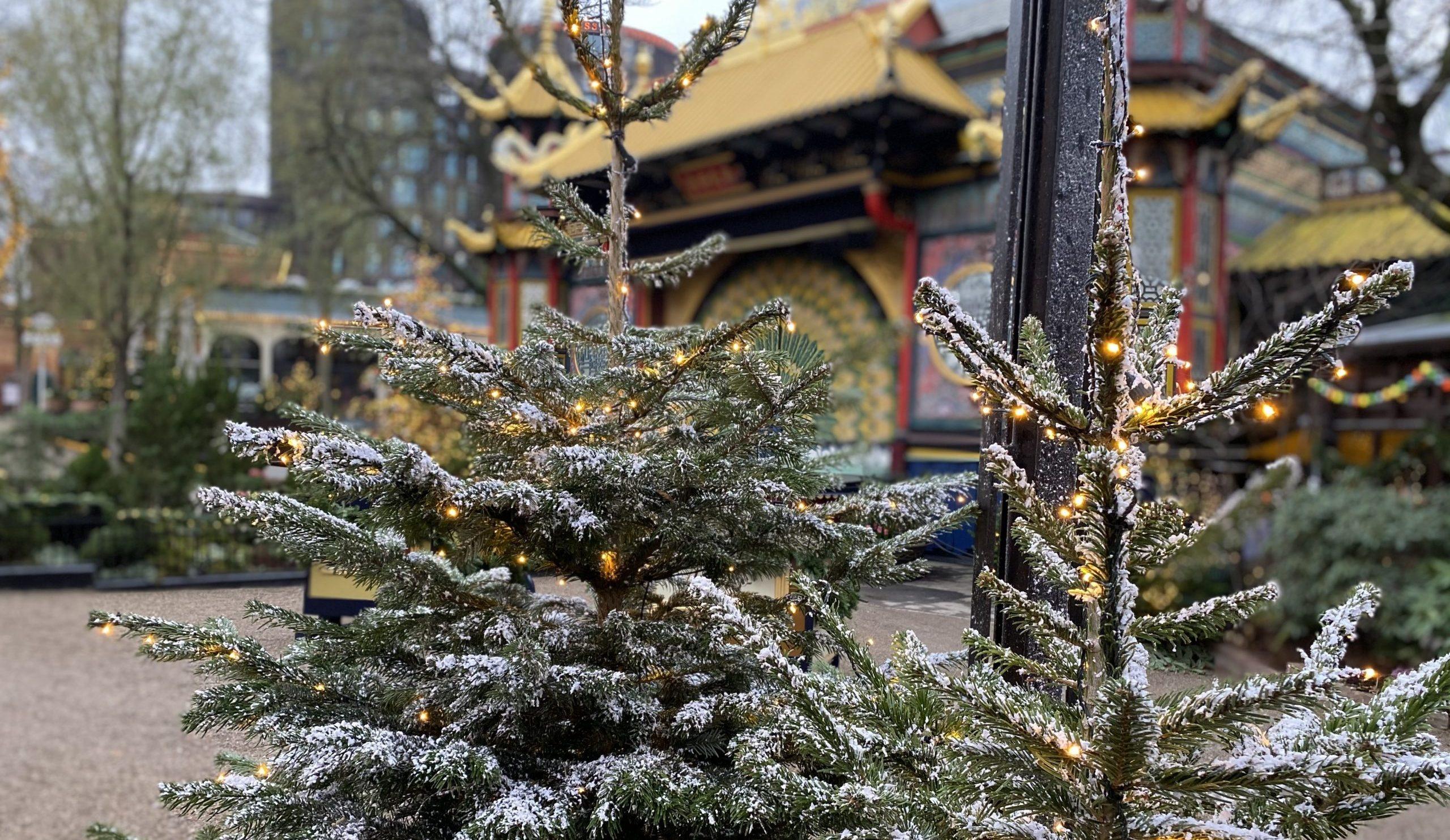 Nærmest alt er anderledes i årets juleperiode. Også i for eksempel Tivoli, der måtte lukke flere uger før planlagt på grund af restriktionerne. De over 1.000 juletræer i Tivoli blev givet til de syv faste COVID-19 testcentre i Region Hovedstaden. PR-foto: Tivoli.