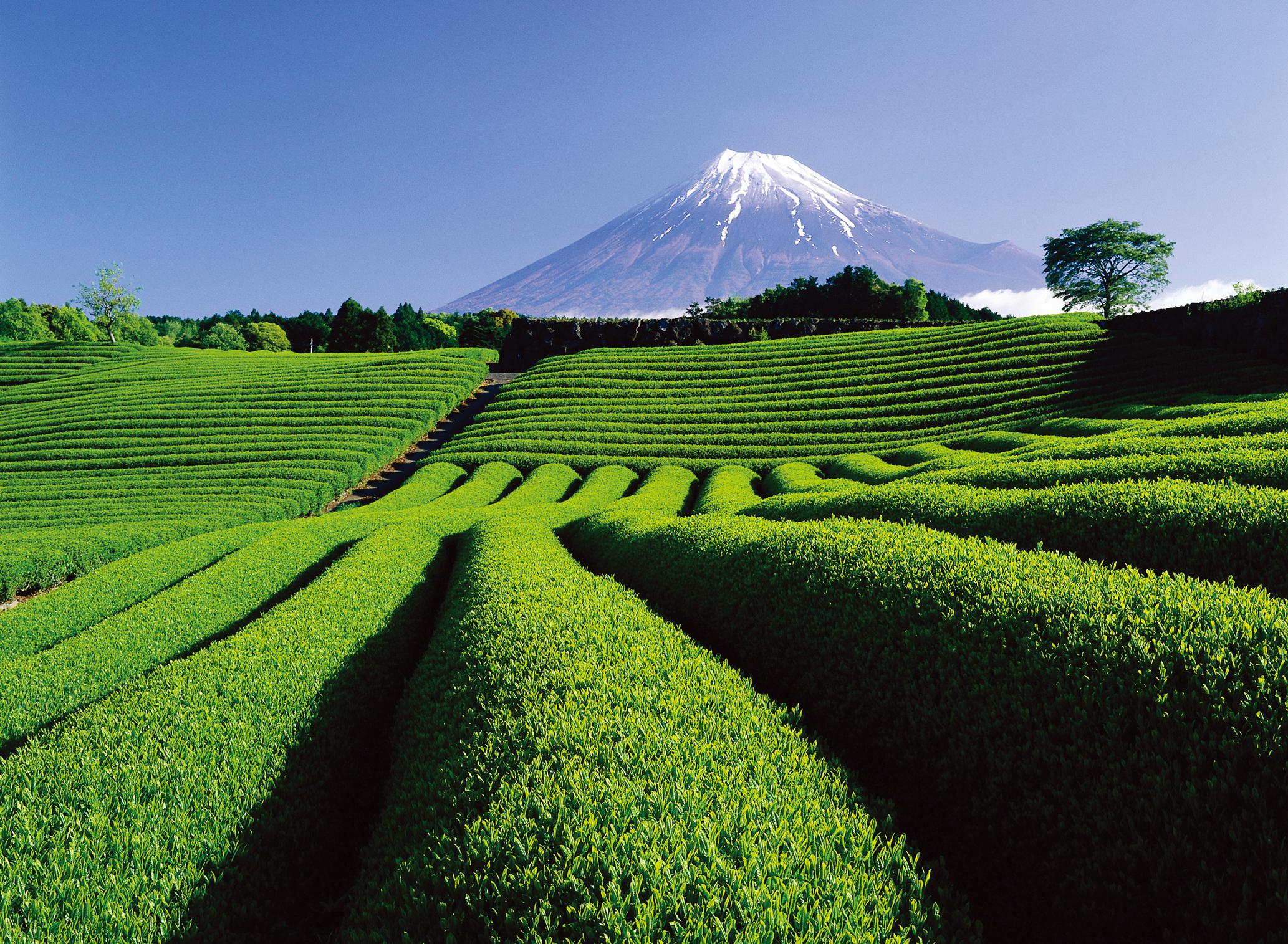 Japan National Tourism Organization skal fremover repræsenteres i Norden af Related, der skal stå for turistrådets nordiske PR-, marketing- og repræsentationsaktiviteter. Arkivpressefoto fra: Japan National Tourism Organization.