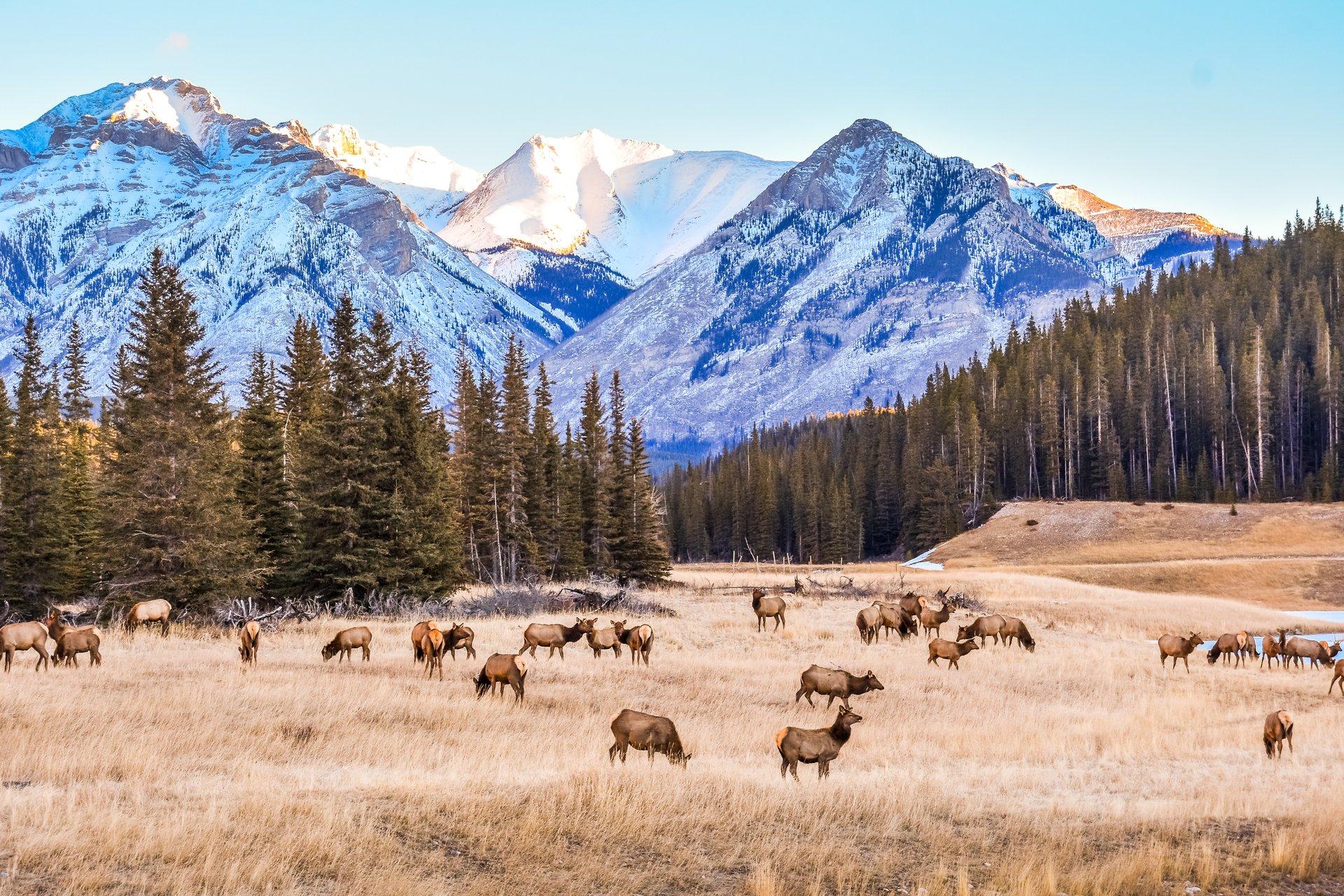 Kæmpestore Canada har masser af oplevelser for turister, der nu kan komme ind i landet, hvis de er færdigvaccineret. Pressefoto for Destination Canada: Robin Matanovich.