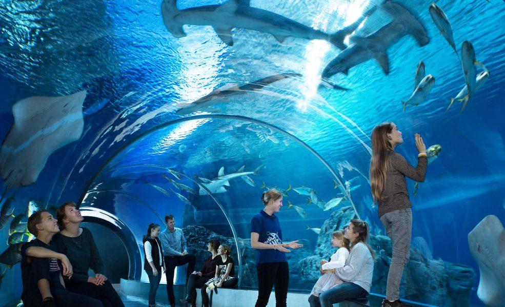 Den Blå Planet, Danmarks Akvarium, var sidste år Danmarks 20. mest besøgte attraktion med 302.000 besøgende, et fald på 45 procent fra 2019, viser tal fra VisitDenmarks attraktionsliste. Pressefoto for Den Blå Planet, Jens Bangsbo.